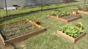 a walk through my multi raised bed square foot vegetable garden 2