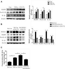 Hypermethylation of the Micro RNA 145 Promoter Is the Key Regulator