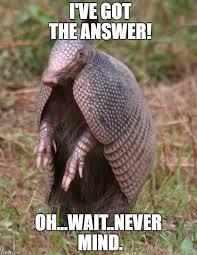 Armadillo Meme - armadillo memes imgflip
