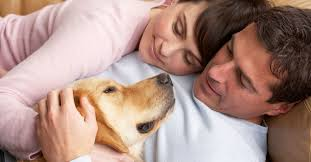 pet euthanasia at home in home hospice care pet euthanasia services mobile vet to pet