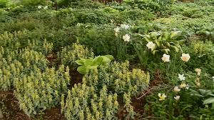 How To Cut Weeds In Backyard Weed Identification Guide