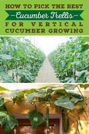 best trellis for cucumbers growing vertically sproutabl