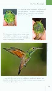 north american hummingbirds an identification guide george c