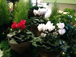 low light plants for office office plants no natural light low light plants office plants that