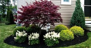 use these colorful shrubs and shrub sized trees to offer year