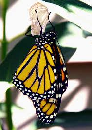 Gambar alam hewan pola serangga fauna invertebrata kupu kupu