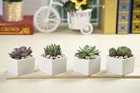 Ceramic Succulent Planter by Wish You Have A Nice Day Set Of 2 Modern White Ceramic Succulent