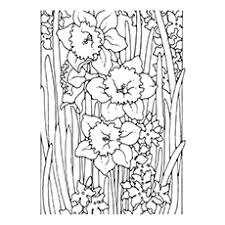 10 lovely daffodil coloring pages