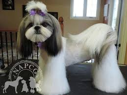 list of shih haircut shih tzu affectionate and playful japanese style japanese and dog