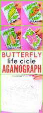 printable butterfly life cycle agamograph template easy peasy
