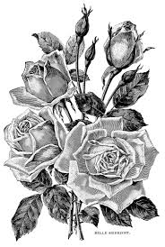 vintage garden roses flowers and vegetation coloring pages for