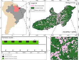Amazon Com Method Daily Wood by Biodiversity Consequences Of Land Use Change And Forest