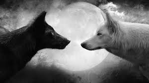 Cute Black And White Wallpapers by Cute Black Vs White Wolf With Moon Full Hd Wallpaper Picsmine