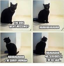 Hahaha Haha Ha Meme - the dog went missing hahahahahaha hahahahaha i m sorry human