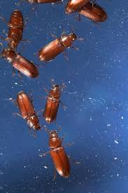 Moths In Kitchen Cabinets Pantry Pest Control Thrasher Termite U0026 Pest Control