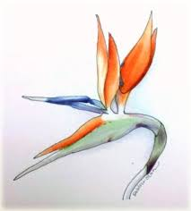 bird of paradise in anaheim sketches in time
