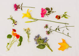 Edible Flowers Snazzy Up Your Entertaining With Edible Flowers Allrecipes Dish