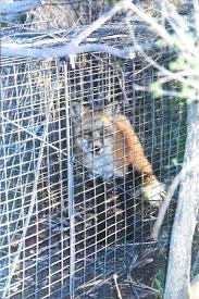 animal damage control photos u2013 colorado wildlife services