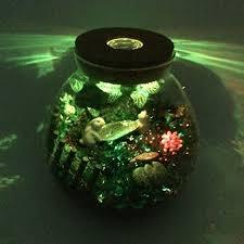 terrarium glass containers amazon com