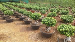 neelkamalnursery plant supplier vertical gardens terrace gardening