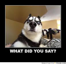 Say What Meme - what did you say shocked dog meme generator posterizer