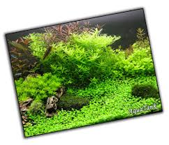 Aquarium Tropical Plants Carpeting Plants Live Aquatic Aquarium Tropical Fish Tank Plants