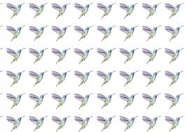 watercolor hummingbird paper free stock photo public domain pictures
