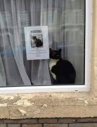 Sneaky Cat Meme - missing cat found sitting next to its own missing cat poster