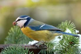 Backyard Bird Store Consider A Roost Box For Your Backyard Birds This Winter The