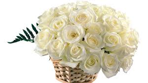 top wallpapers white rose pictures wallpaper top white rose