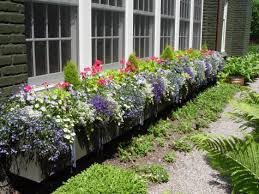 Flower Boxes That Thrive In by Spring Flowers Dirt Simple Part 3