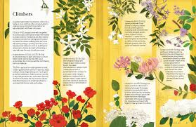 flora the graphic book of the garden guy barter sam falconer