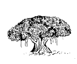 file indian election symbol tree png wikimedia commons