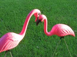 how did plastic pink flamingos end up in front yards knowledge stew