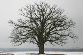 winter tree care tips circle tree shrub