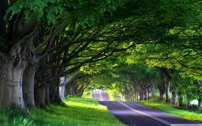 tree lined street hd desktop wallpaper high definition