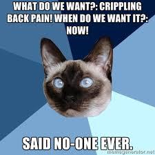 What Do We Want Meme Generator - hypersomnia 皓 chronic illness cat