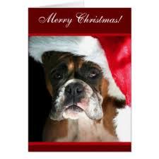 boxer dog xmas boxer dog christmas cards zazzle