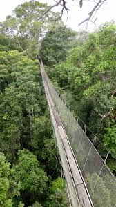 Above The Canopy by It U0027s A Jungle Out There U2014 The Raesides In Peru