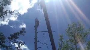 Wildfire Telluride Co by Tree Experts Arborist Tree Removal Telluride Colorado