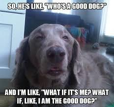 Yo Dog Meme - dog meme dump yo album on imgur