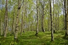 forest images The random forest algorithm towards data science jpeg