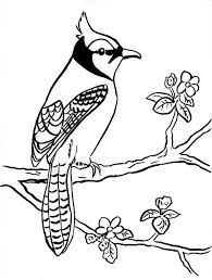 blue coloring pages blue jay bird coloring page free printable
