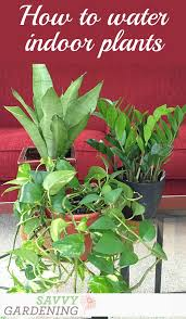how to water indoor plants basic houseplant watering tips and