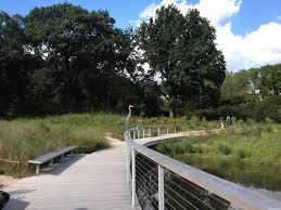 native plants of the northeast native flora garden brooklyn botanic garden