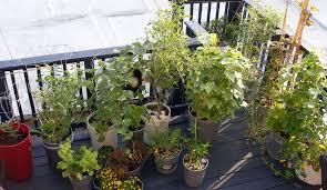 what u0027s plants on deck u2013 plants on deck