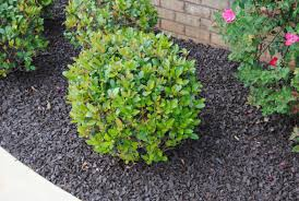 a ornamental landscaping bushes with landscaping bushes idea