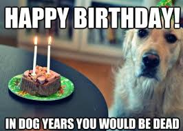 Happy Birthday Dog Meme - top dog happy birthday funny memes 2happybirthday