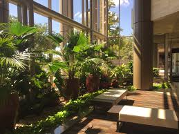 multi tenant archives plant interscapes indoor office plants