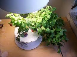 Countertop Herb Garden by Tabletop Herb Garden Home